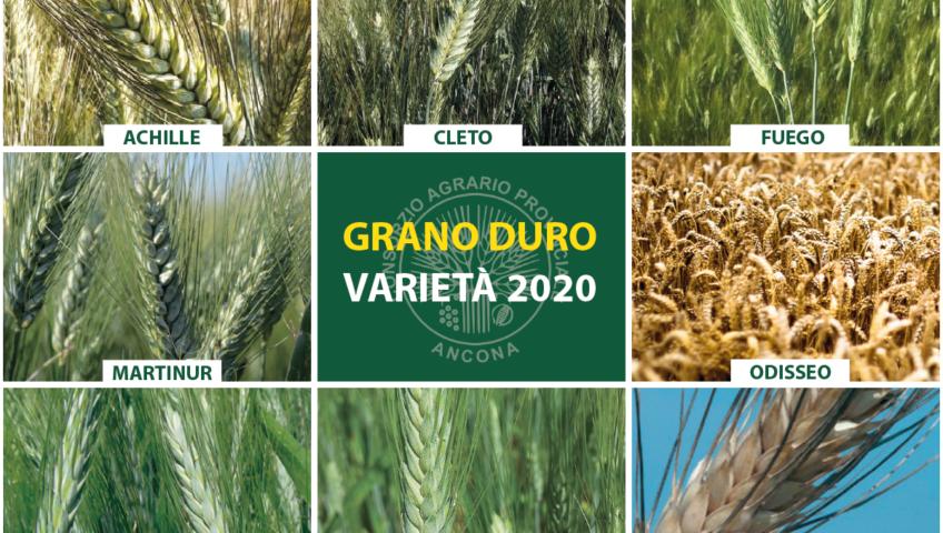 Varietà grano duro 2020